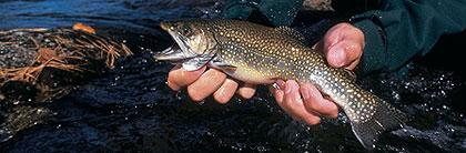 Wisconsin's Blue-Ribbon Trout Fishing