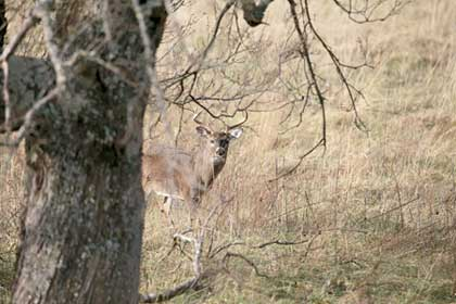 Whether you hunt on private or public land, deer numbers are looking great for Wisconsin's 2007 archery season. (September 2007)