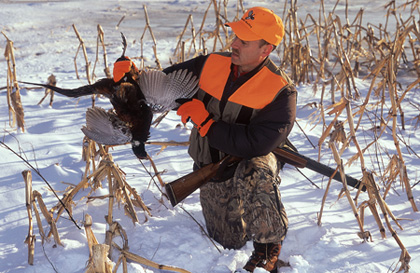 Most hunters put away their shotguns in November. That's a big mistake, because the educated roosters are out there just waiting to outsmart you! (December 2006)
