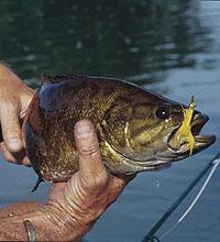 Banks Lake Bass