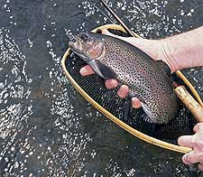 4 Trout Tailrace Hotspots In Our State