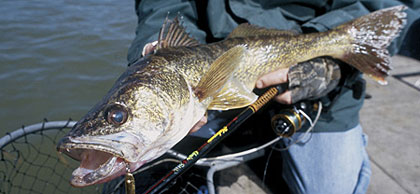 First rate walleye fishing in west virginia for Wv fish stocking