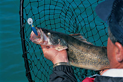 Good marble-eye angling is possible throughout our state, especially on Jennings Randolph, Stonecoal and Sutton lakes. Here's what you can expect to find this season. (March 2009)