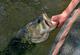 Elk Fork Lake's Largemouth Bass