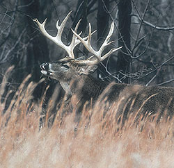 Here's how hunters fared last season in our state with big bucks -- and where you can expect to find a trophy or two this season. (November 2009)
