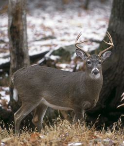 Old-school hunting enthusiasts in our state continue to do their part to manage the deer resource by posting impressive harvest numbers -- one shot at a time -- each season. Here's the latest! (December 2007)