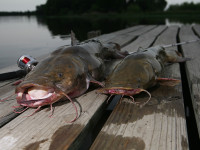 texas catfish country