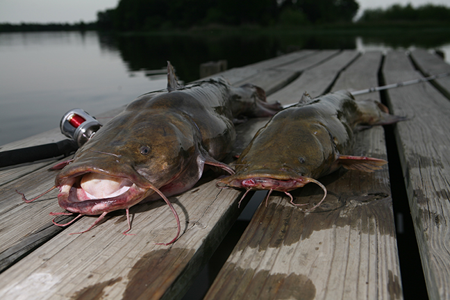 Finding Catfish 2