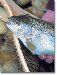 Top pennsylvania trout streams game and fish for Best trout fishing in pa