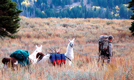 As usual, Colorado is expected to win the blue ribbon for Rocky Mountain deer this year.