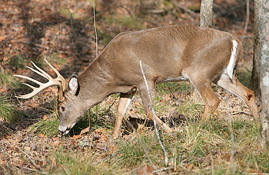 Fish  Game Forecast on 2011 North Carolina Deer Forecast   Where To Get Your Deer