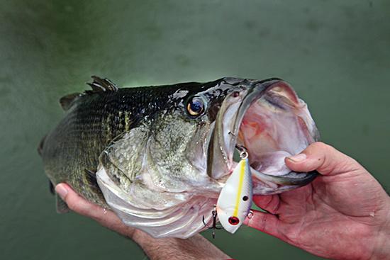 Three Ways To Crank Up Fall Bass Fishing