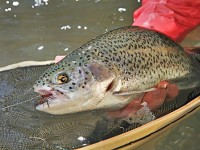 GF_spinfishing_111711A