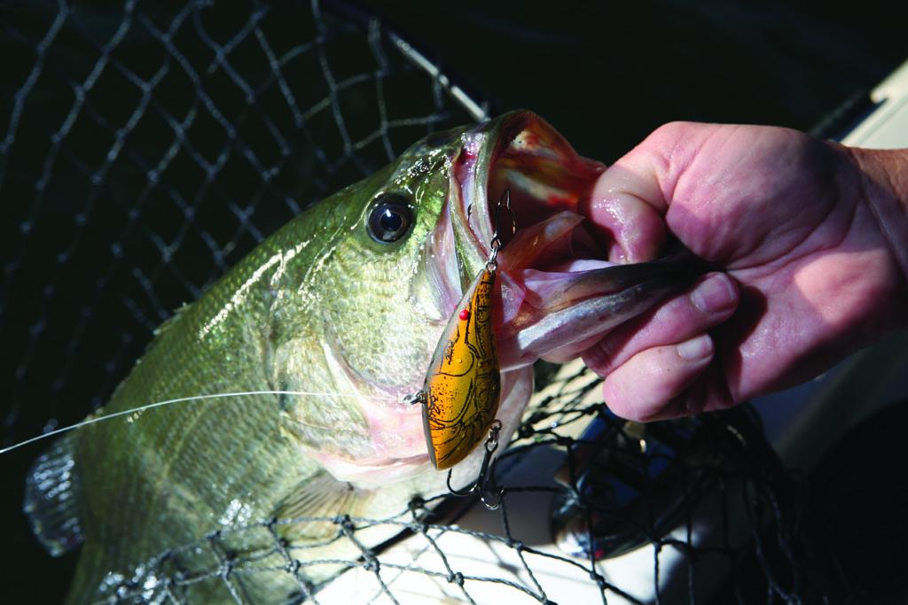 Georgia's Best Wintertime Hunting and Fishing