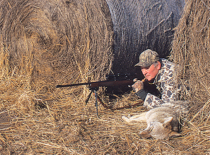 Top Tips For Calling Coyotes!