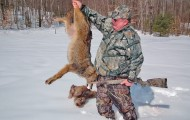 The author dropped this coyote after he called it from nearby woods. The animal had been feeding on a dead deer carcass and hadn't moved far from the easy meal. Photo by Stephen D. Carpenteri.