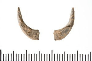 Oldest fish hooks