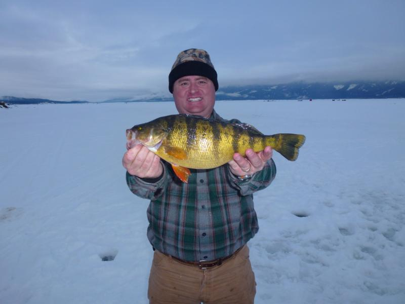 Idaho angler Bob Shindelar tied the state record for yellow perch Saturday, reeling in a 16-inch,