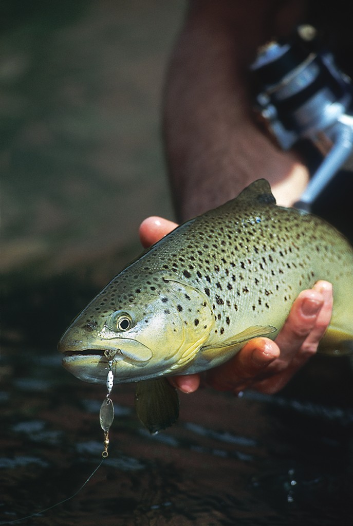 2012 california trout forecast game fish for Game and fish forecast