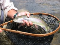 Trout fishermen in the Northeast can target rainbows, browns, brookies and splake in lakes, ponds and rivers throughout the region.  Photo by Stephen Carpenteri.