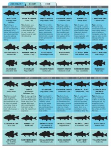 Hot spots for new york fishing game fish for Best saltwater fishing spots in nj