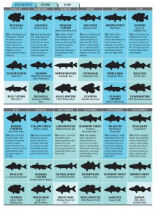 Best bets for ohio fishing game fish for Ohio fish and game