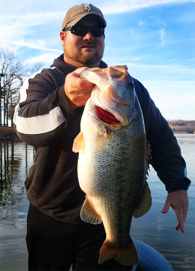 A possible record-breaking largemouth came out of Tennessee's Pickwick Lake -- and chances are,
