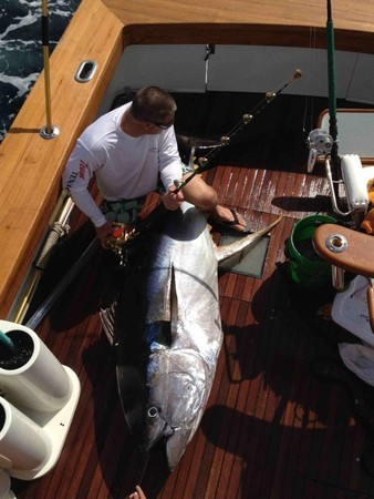 A California angler has landed what could be a world record yellowfin tuna.