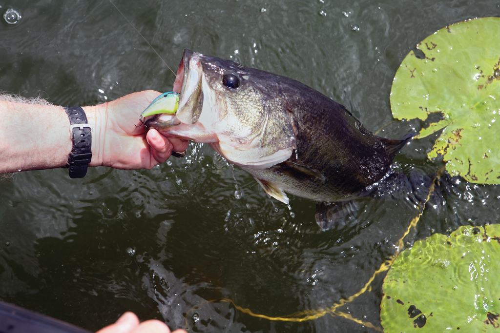New York State fisheries biologists are willing to take on the challenge of healing a sick lake