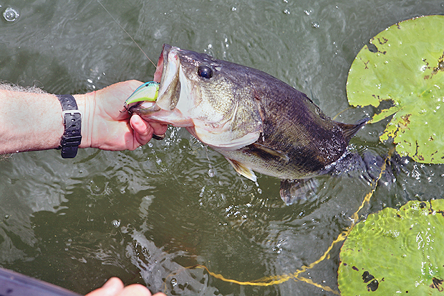 Tactics For Small Pond Bass