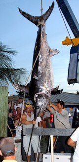 A 683-pound swordfish is reeled in near the Florida Keys -- the second big broadbill in just a couple of weeks.