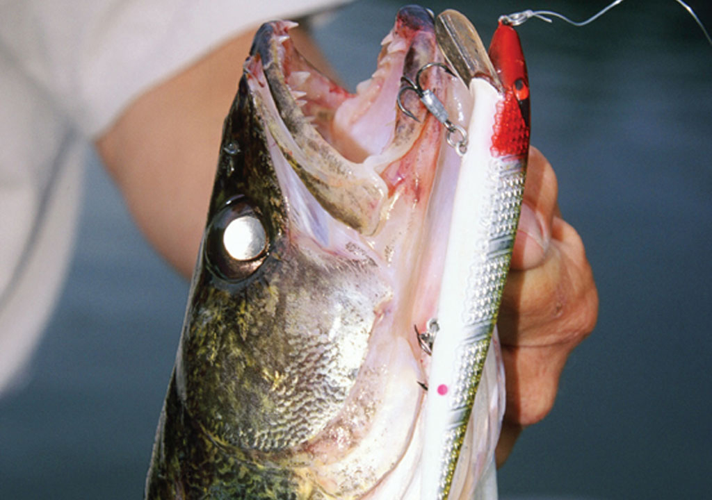When a good many fishermen think about fishing, their thoughts naturally turn toward largemouth