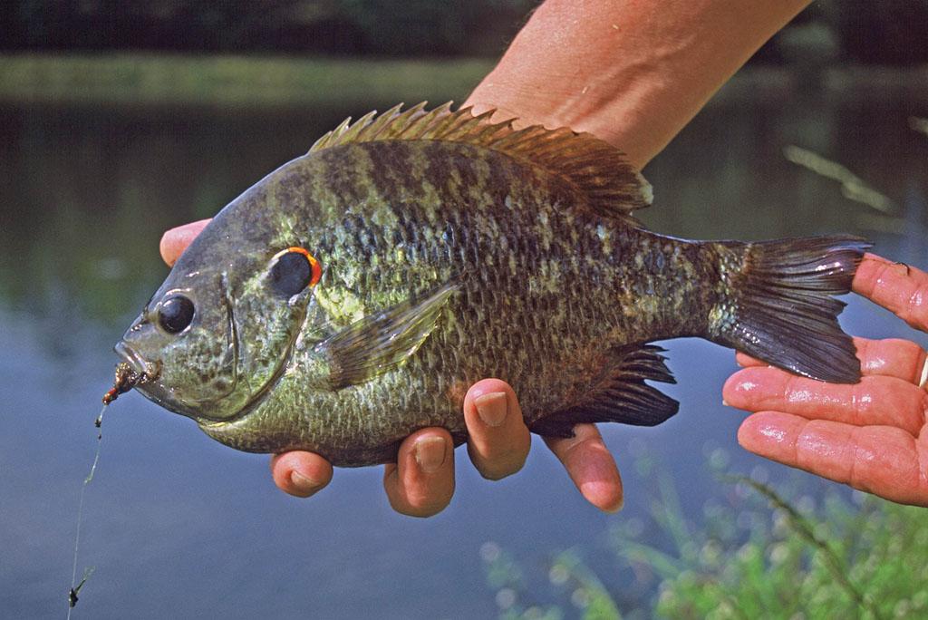Best Alabama Bream Fishing Spots