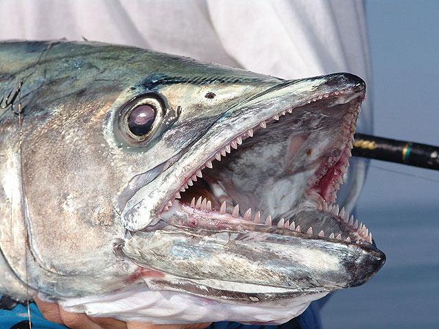 N.C. saltwater fishing