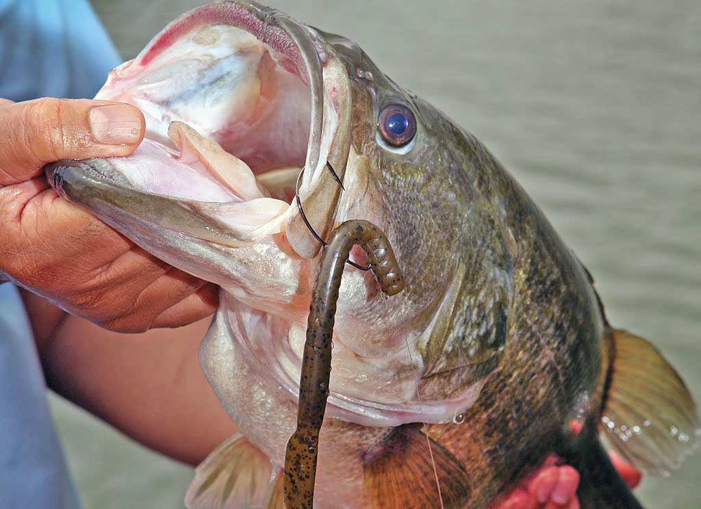 5 Essential Lures for May Bass