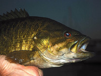 Best-baits-for-bass-fishing-at-night