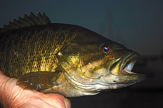Why you should try bass fishing at night game fish for Local bass fishing clubs