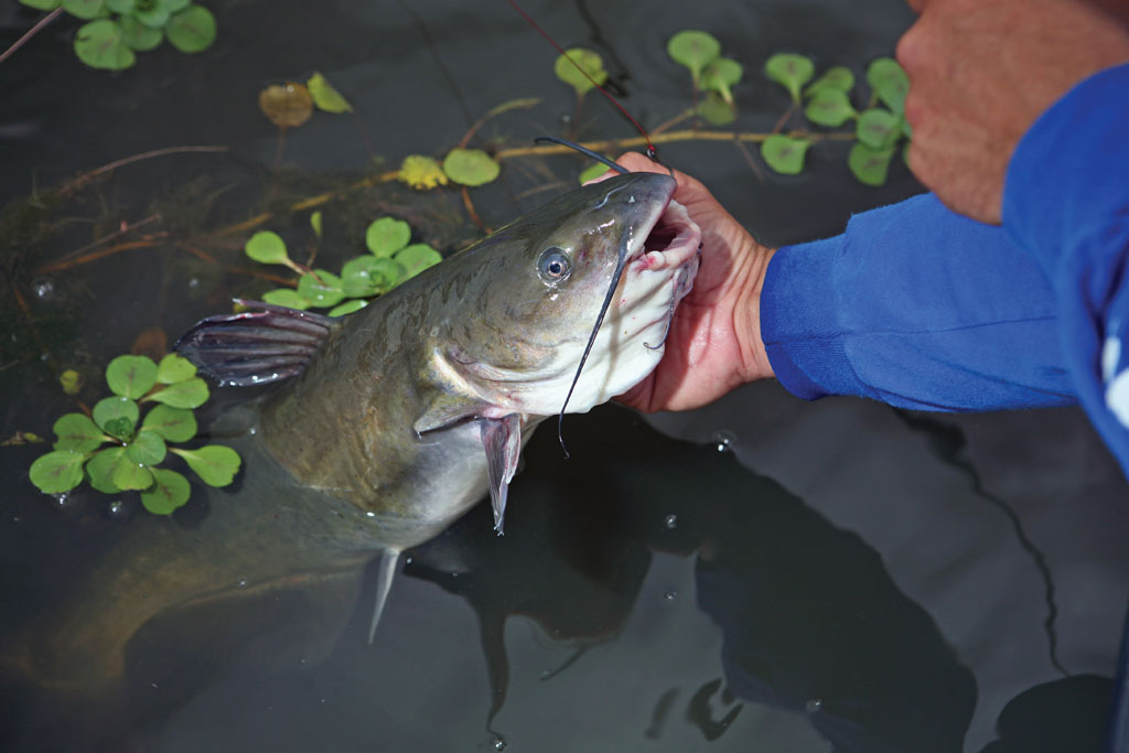 North Carolina during July and August can be brutally hot for fishing, on both freshwater and