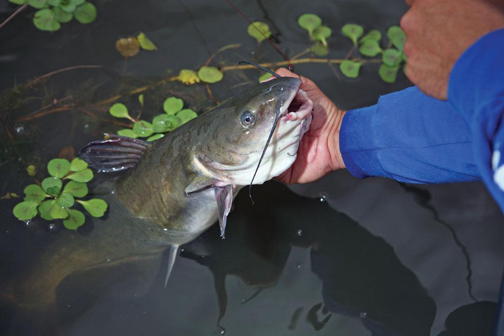 Summer Hotspots for North Carolina Fishing