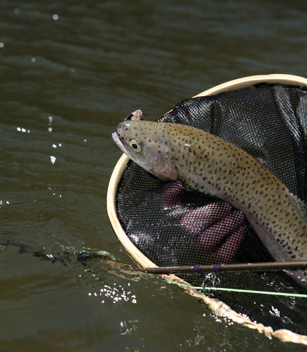If trout fishing in moving water is your passion, then you're in luck this month. Water levels