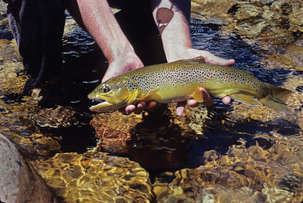 While hot weather and trout fishing don't necessarily make the perfect angling marriage, here are