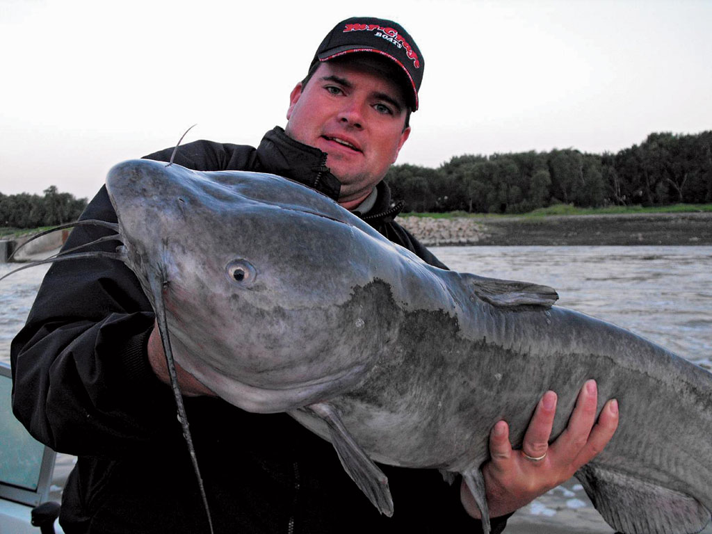Study launched to track trophy ohio river catfish for Ohio river fish