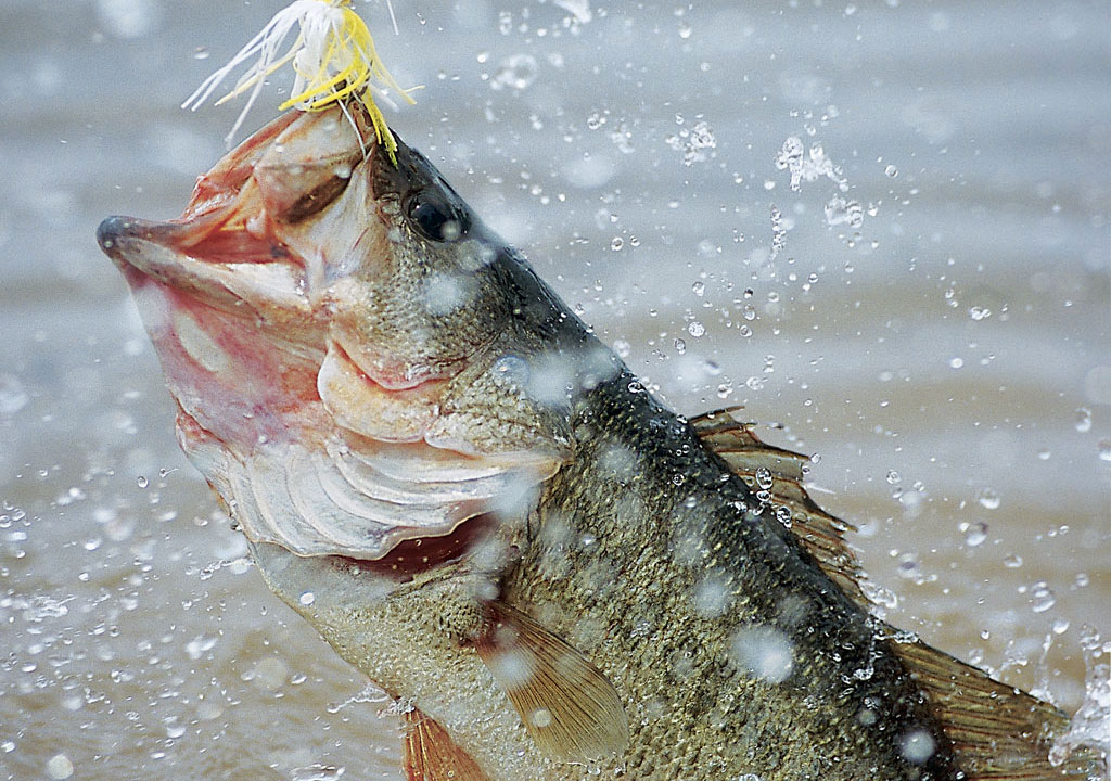 Changing Gears for Trophy Bass