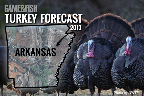 Arkansas turkey hunting is still on life support, but it's showing remarkable signs of