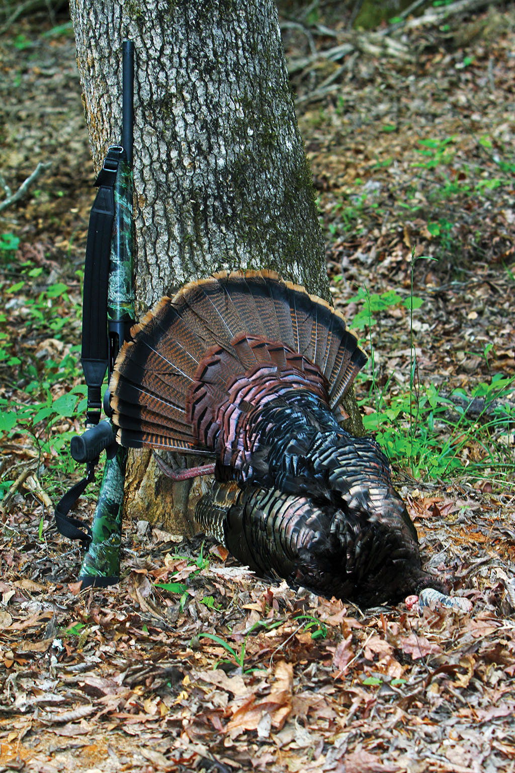 With the first hint of spring, Louisiana turkey hunters are ready to get into the woods. That wild,