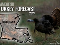 Mississippi and louisiana turkey forecast for 2015 game for Mississippi fish and game