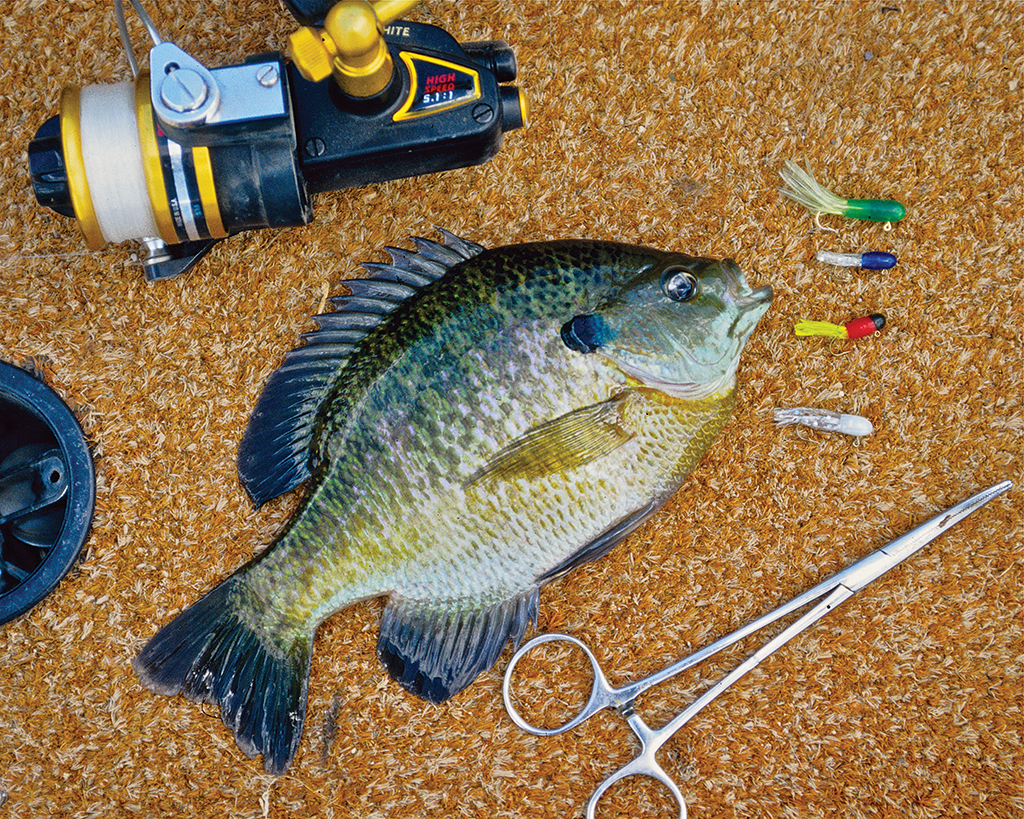 How to Catch a Big Bluegill this Summer