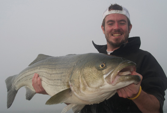 In the glory days of striped bass fishing, as you'll hear them referred to by any striper fisherman