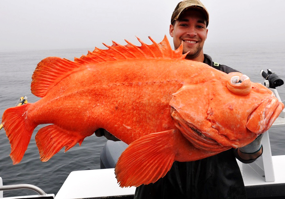 Best of Summer Fishing: 15 Catches That Will Blow Your Mind