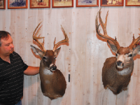 mounted bucks, taxidermy, darrell mcmicken